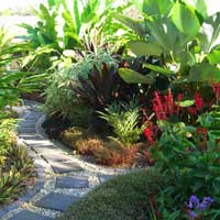 Suzan quigg landscape design cairns and north queensland for Garden design qld
